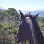 sports360-finale-ligure-equitazione-easy-horse-center-passeggiate-cavallo-30